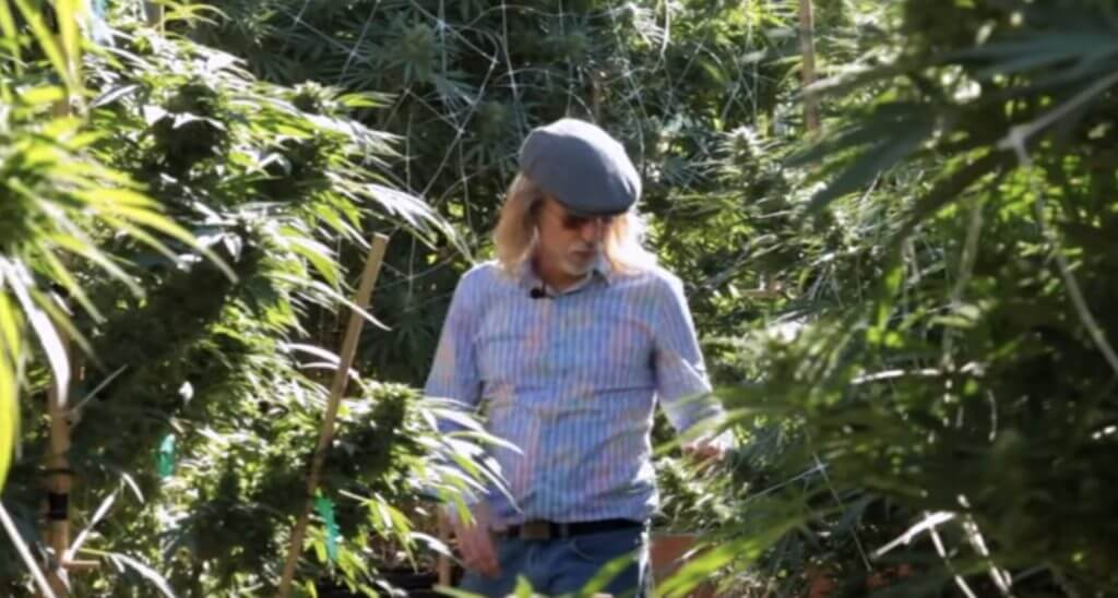 cannabis expeditions1 1024x548 - Video - Cannabis Expeditions The Green Giants of California with Jorge Cervantes