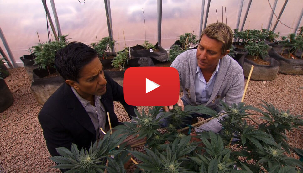 sanjay gupta cnn doc video cover3 - Video - WEED: A CNN Special Report by Dr. Sanjay Gupta