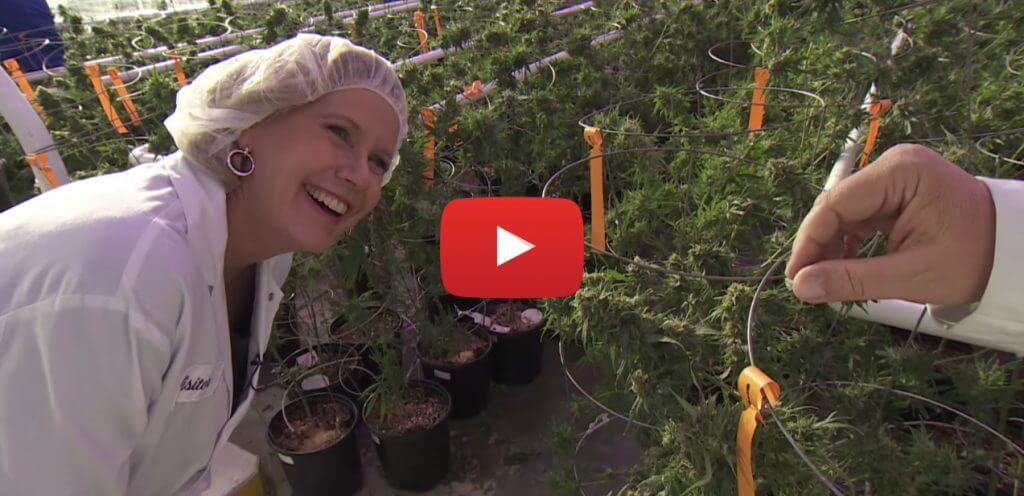 whatisatstake video 1024x496 - Video - Legalizing recreational marijuana in Canada and what's at stake