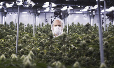 aurora cannabis medreleaf merger featured 400x240 - Canopy Growth's position as top global cannabis company shaken by merger of two rivals