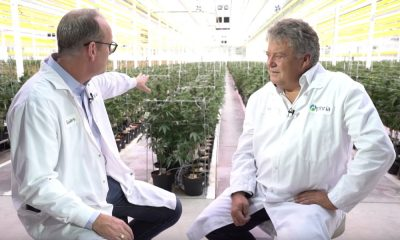 aphria happens after legalization featured 400x240 - As legalization nears, Canada's pot companies about to be tested