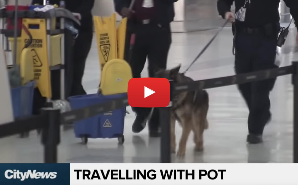 30 grams pot legal airplane video2 - This is 30 grams of marijuana and how much weed Canadians can carry on domestic flights