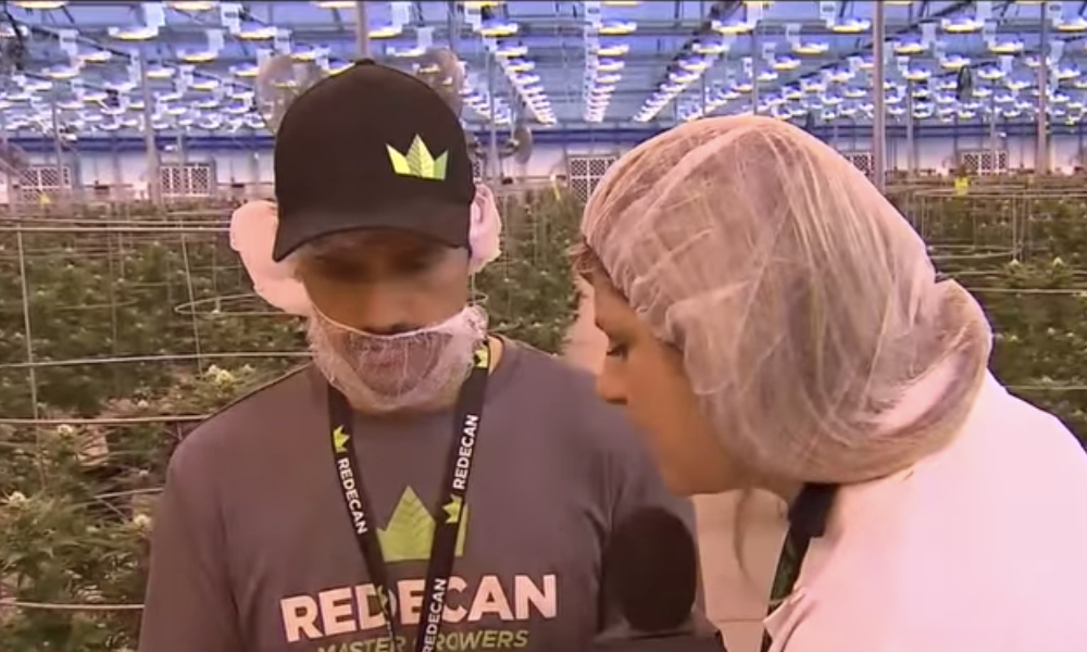 city tv tours redecan featured - Massive OCS Complaints: Redecan recalls $200,000 in suspected bug infested weed, CityNews tours facility