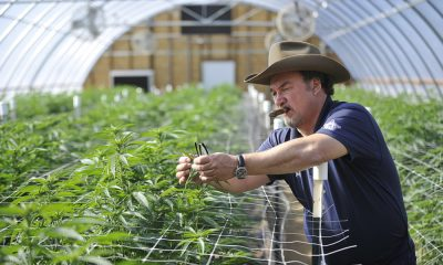 jim belushi inspired cannabis featured 400x240 - Inspired from his brother's death, tour Jim Belushi's 93-acre cannabis farm in Southern Oregon