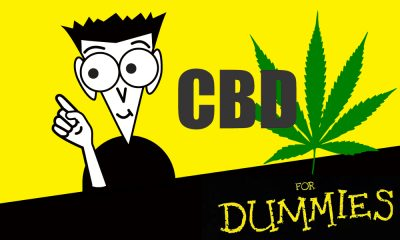cbd for dummies featured 400x240 - CBD for Dummies. Claims that CBD cures just about everything, but what's the truth?