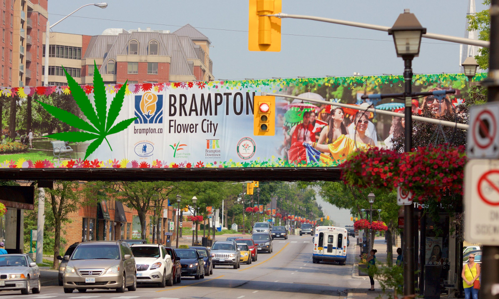 brampton deciding pot featured - Brampton divided over legal weed shops. 170 cities across Ontario face Monday deadline