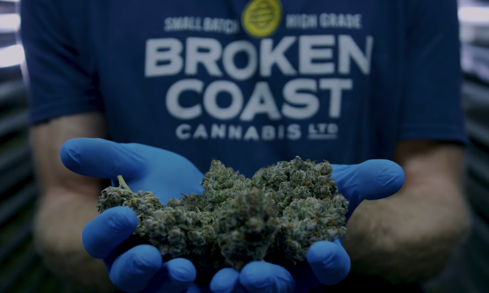 broken coast showcase featured - Featured Cannabis Producer. From the Shores of Vancouver Island: Broken Coast