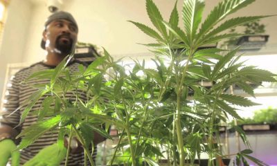 lawyer grow pot condo featured 400x240 - Ask a Canadian lawyer: Can I grow marijuana in my apartment or rental unit? Is It Legal?