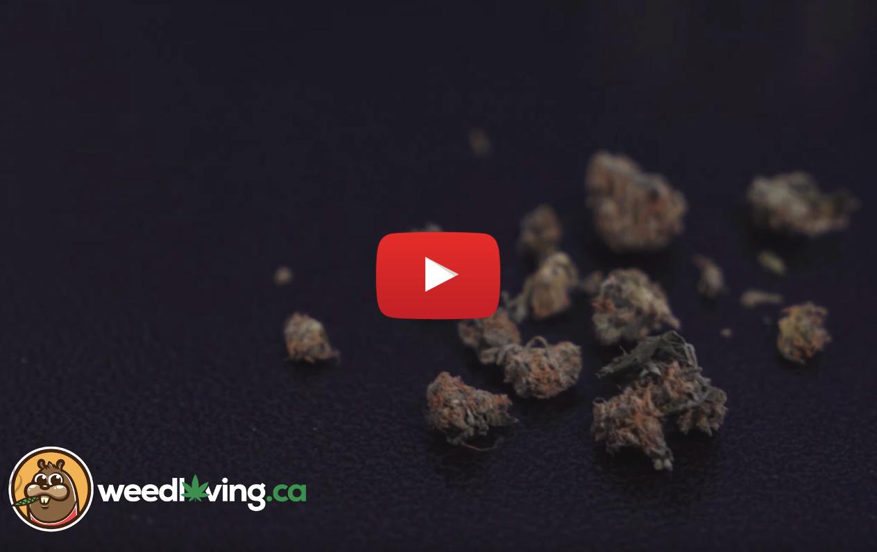 weed review houndstooth tweed video - WeedLoving.ca Video Weed Review – Houndstooth by Tweed/Canopy Growth