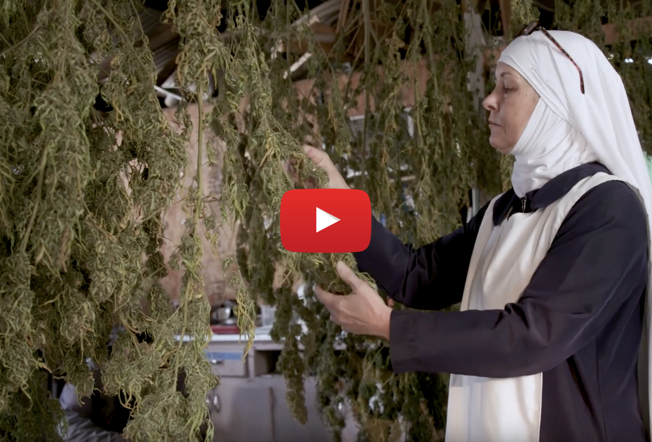 california weed nuns video - Sweet Jesus! How California's 'Weed Nuns' turned CBD into a million-dollar business