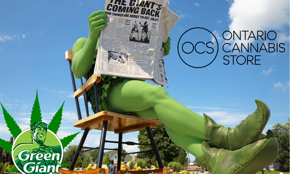 cannabis seed ocs featured - Growing your own marijuana? Where are the seeds on the Ontario Cannabis Store?