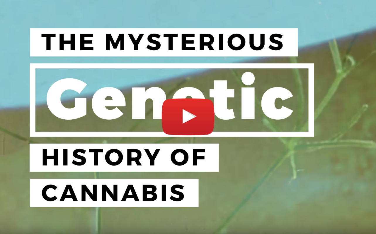 marijuana_genetic_history_video