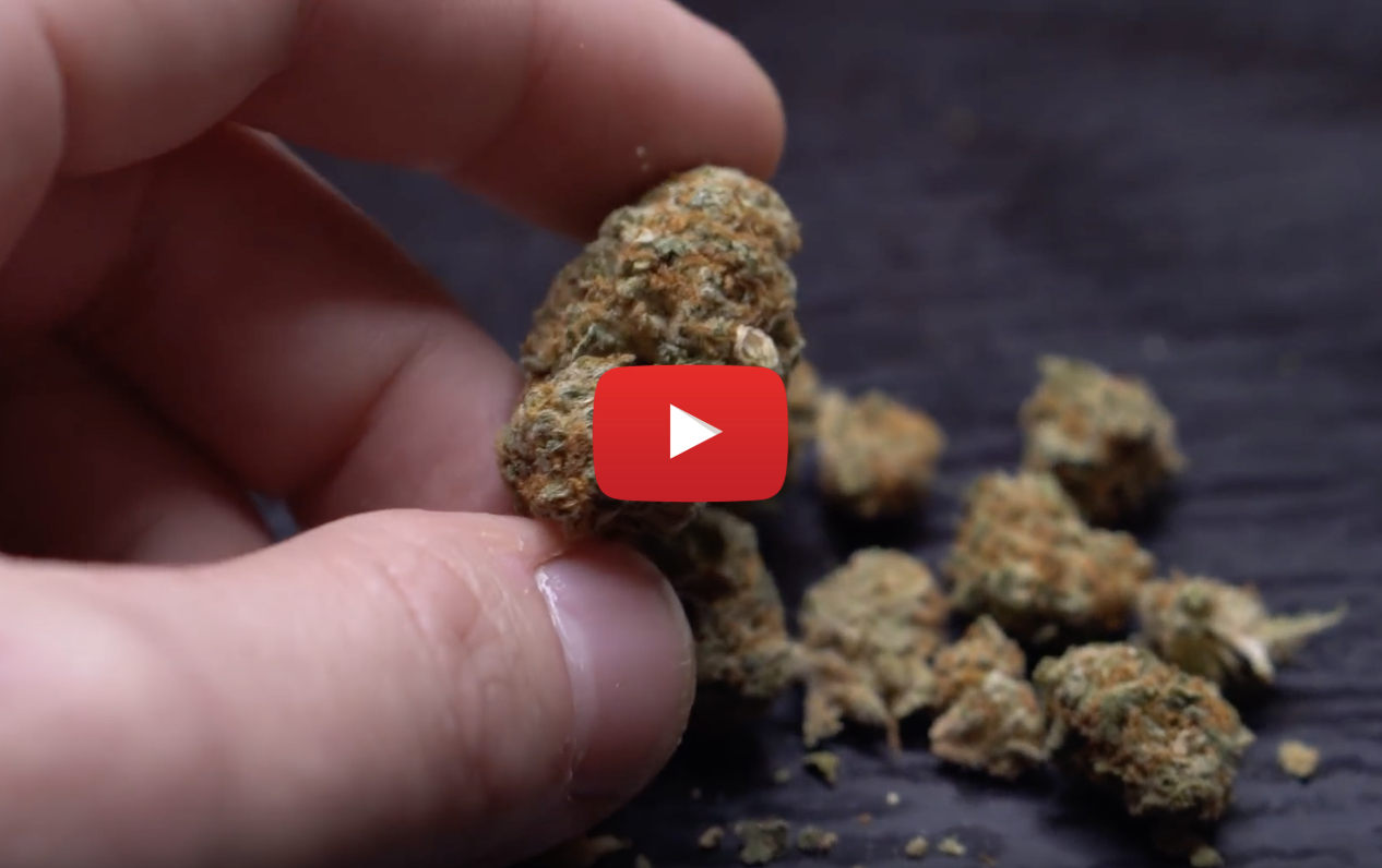 30 grams weed ocs video - 4 months later: 30 grams of the most expensive weed on the OCS website reviewed
