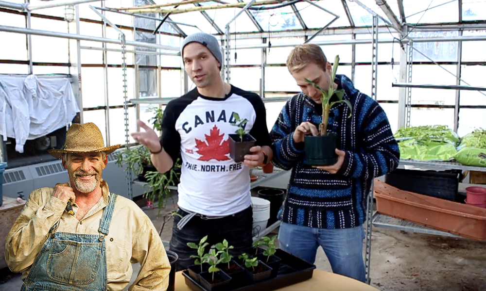 How Canadians grow weed.... these two are still learning