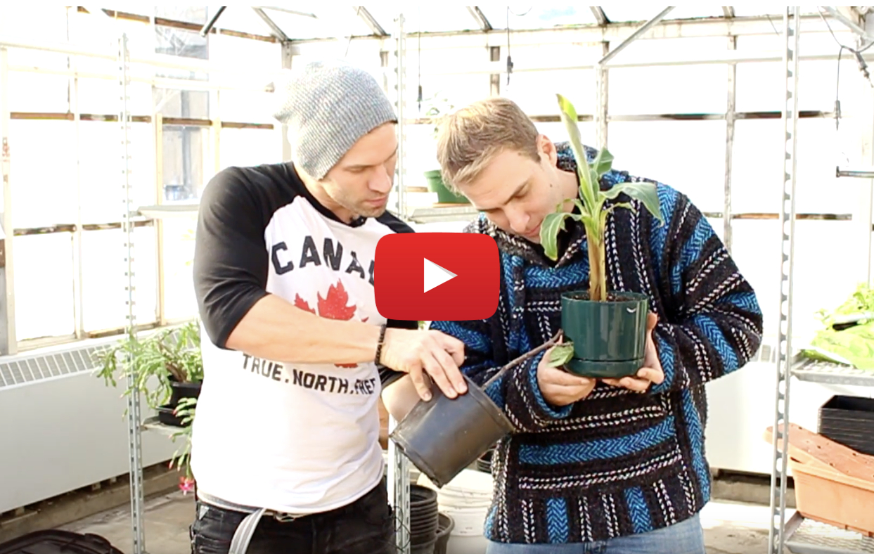 how canadians grow weed video - How Canadians grow weed.... these two are still learning