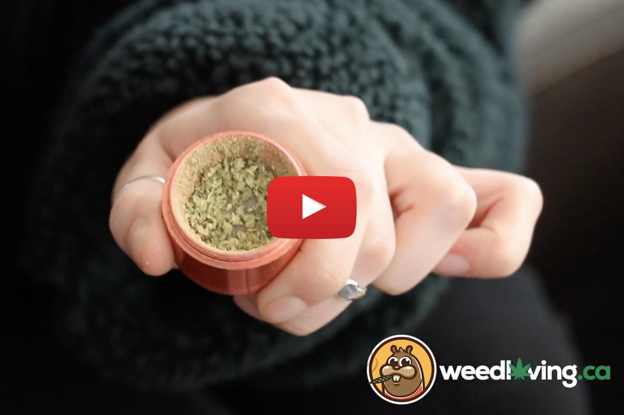 lola montes weed review video - WeedLoving.ca Video Weed Review – Lola Montes by Edison Cannabis