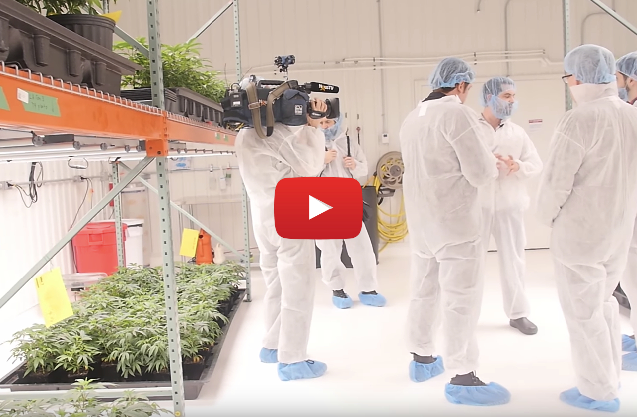 Tour 1.2 million square foot The Green Organic Dutchman (TGOD) cannabis greenhouse in Valleyfield