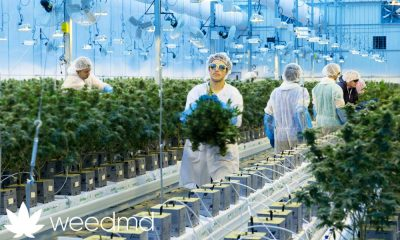 WeedMD gets $39 million loan from BMO to back outdoor marijuana grow plans
