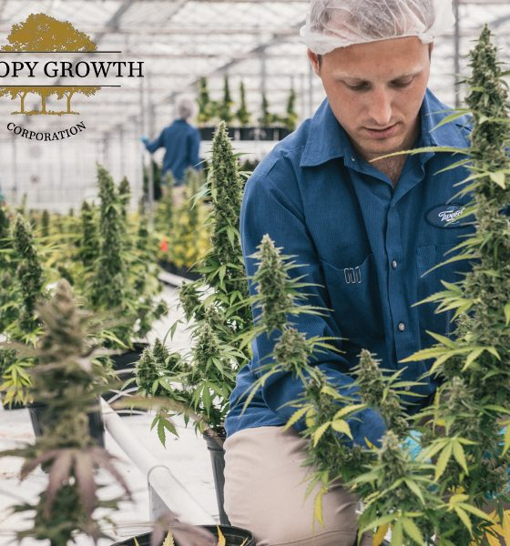 Canopy Growth is the biggest cannabis company in the world, what about the craft growers?
