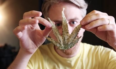 Ever tried eating deep-fried marijuana leaves?