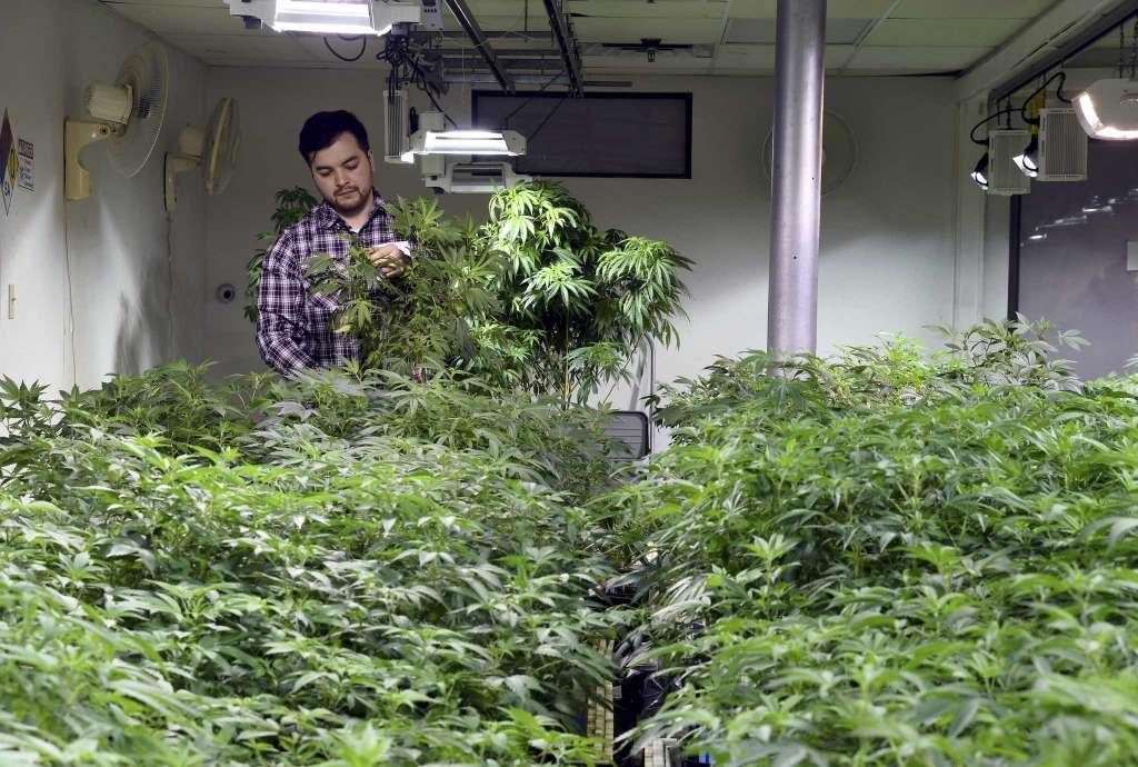 legal immigrant denied citizenship 1 - Some legal immigrants with marijuana jobs denied US citizenship in Colorado