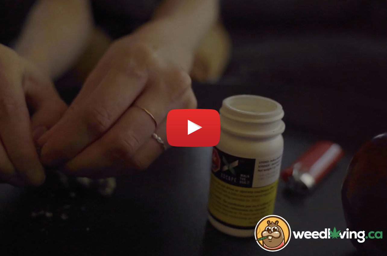 xscape walk the dog video - WeedLoving.ca Video Weed Review – Walk the Dog by XSCAPE