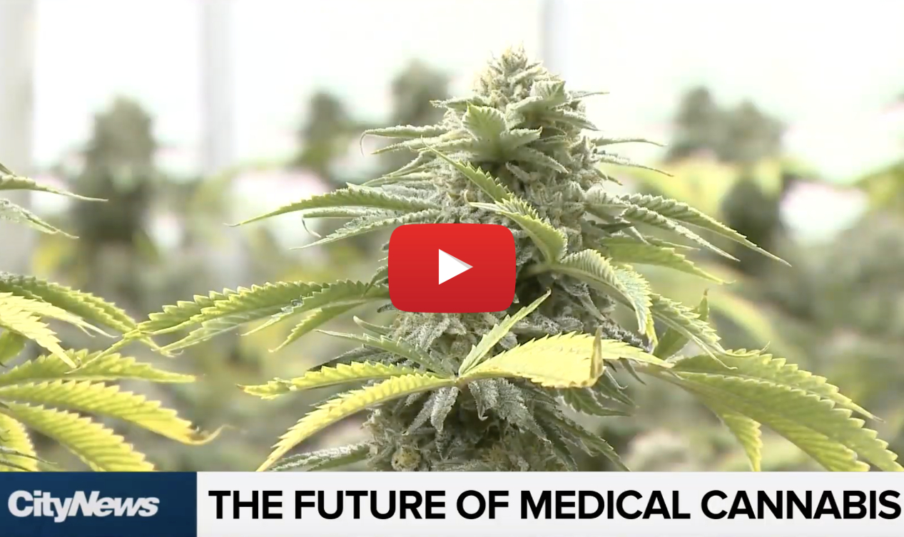 future medical marijuana video - Taxes? Shortages? What's the future of medical marijuana in Canada?