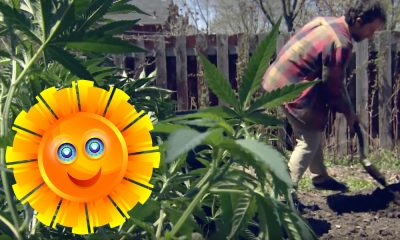 summer of pot featured 400x240 - It's the summer of pot! Why Canadians everywhere will grow weed in their gardens this year