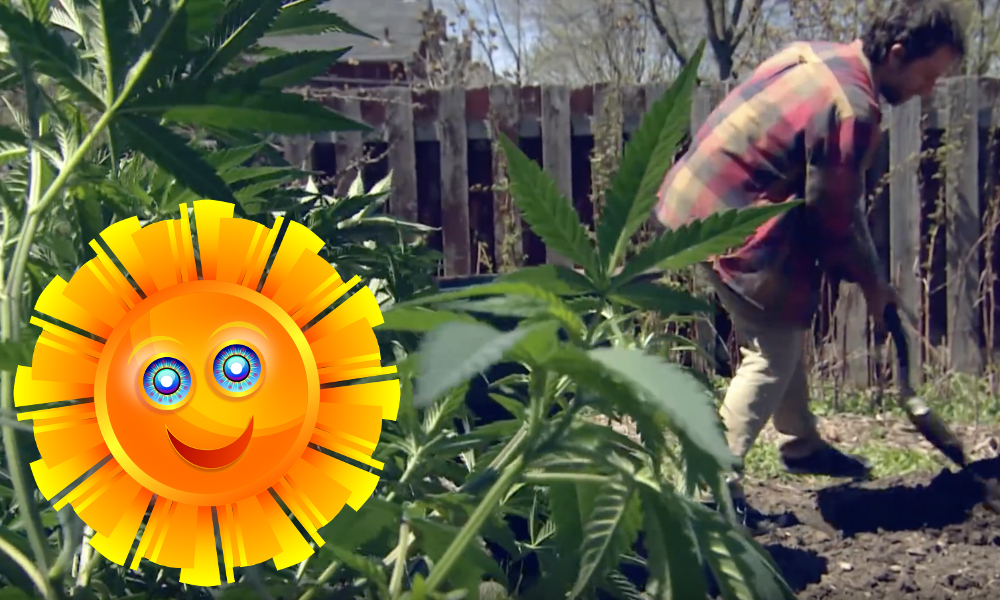 summer of pot featured - It's the summer of pot! Why Canadians everywhere will grow weed in their gardens this year