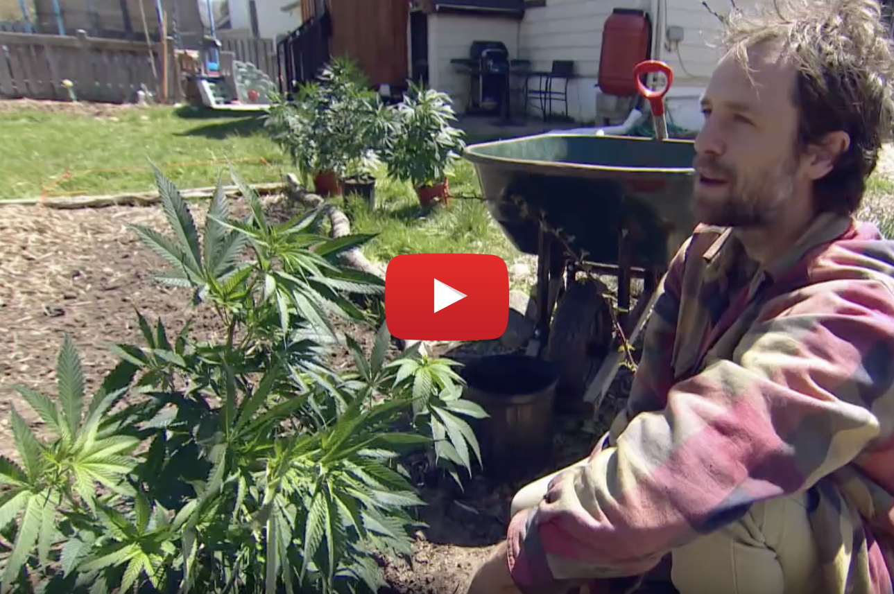 summer of pot video - It's the summer of pot! Why Canadians everywhere will grow weed in their gardens this year