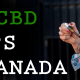 top cbd shops canada 00000 80x80 - Top 15 Online CBD Shops and Dispensaries in Canada 2019