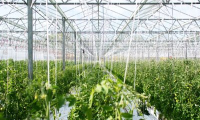 How to set up a greenhouse management system for cannabis