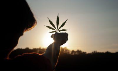 david gabric KdC5agsz6ik unsplash 1 400x240 - What's New on the Cannabis Market in 2021?