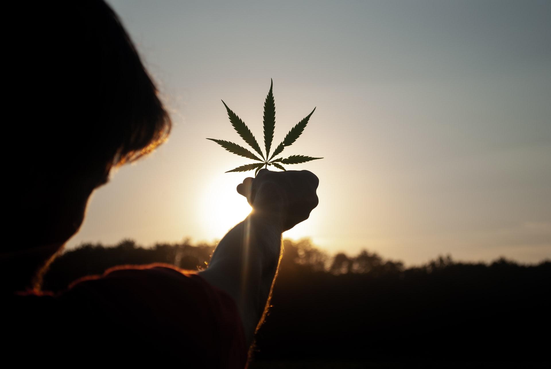 david gabric KdC5agsz6ik unsplash 1 - What's New on the Cannabis Market in 2021?